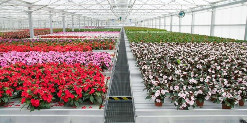 SICK Rutishauser Identifikation Blumen